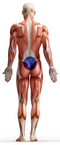 Back-Pain-&-Sciatica