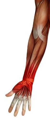 Strain-Injury